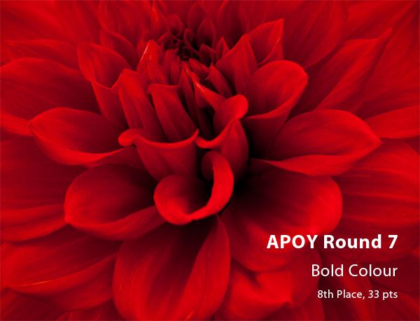 APOY Round 7, Bold Colour