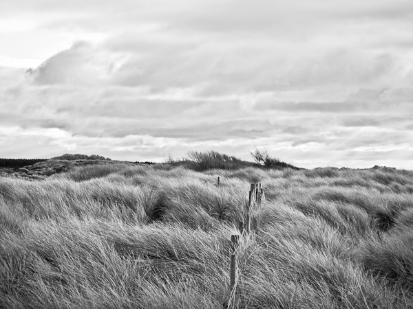 Ainsdale Dunes in Monochrome